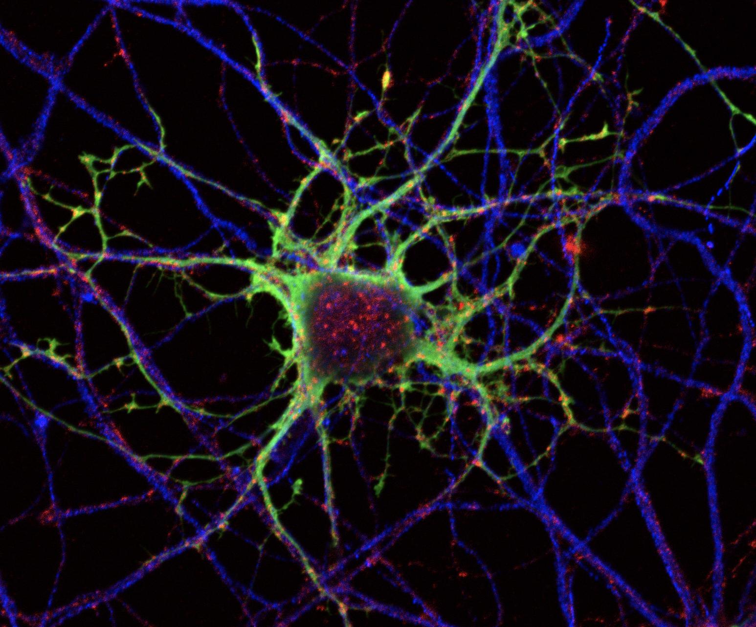 Nuestra percepción del tiempo podría verse alterada por el cansancio de las neuronas