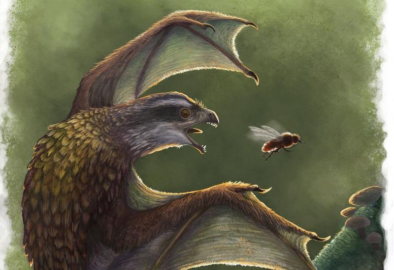 Estos pequeños dinosaurios con alas como murcielago realmente no volaban tan bien