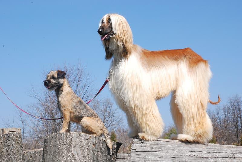 Los perros ya eran sorprendentemente diversos hace 11 mil años