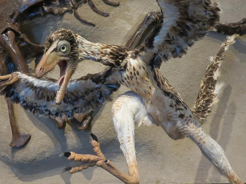 La pluma fósil más antigua sí proviene de un Archaeopteryx, confirma un estudio