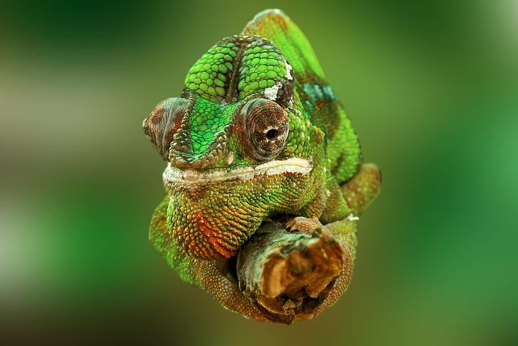 Científicos crean un material flexible inspirado en los camaleones que cambian de color