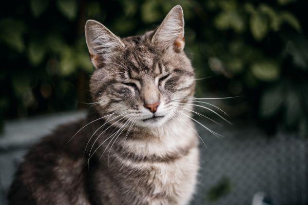 La mejor forma de «sonreír como gato» es parpadeando lentamente, confirma estudio