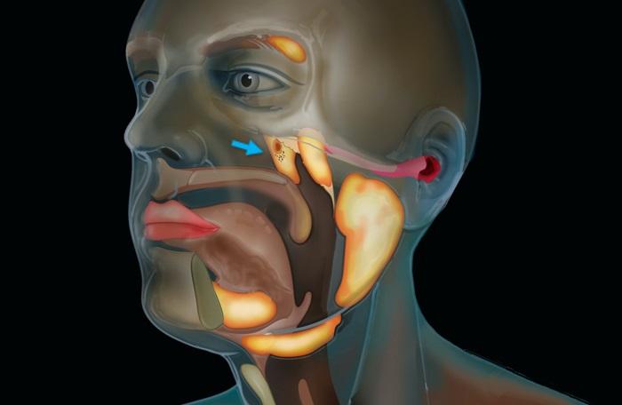 Científicos descubren un nuevo órgano en el centro de nuestras cabezas