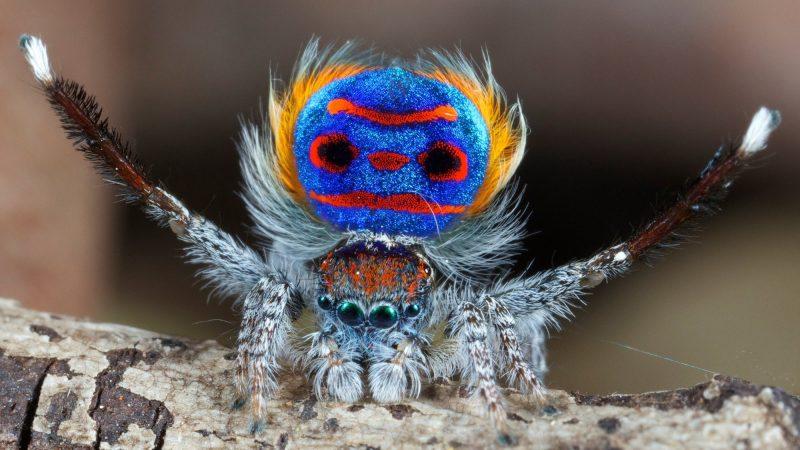 5 datos que debes conocer sobre las arañas.