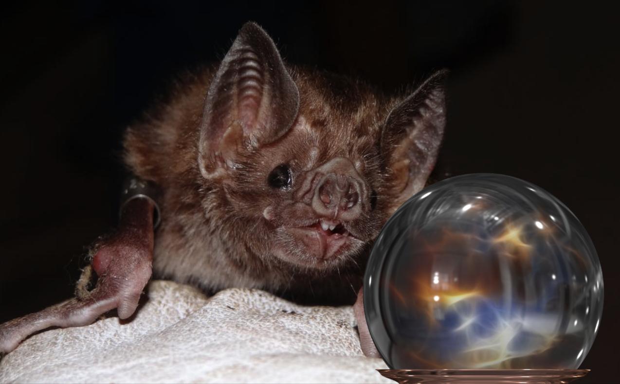 Descubren que los murciélagos pueden 'predecir el futuro'