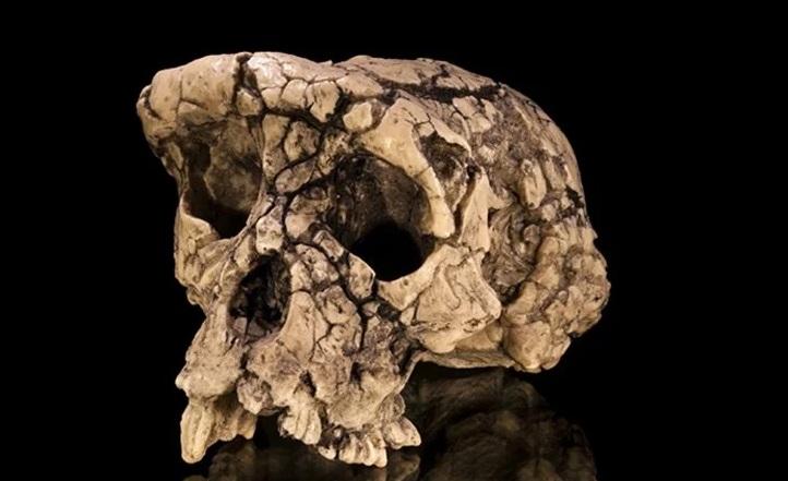 Este cráneo de 7 millones de años puede no haber sido nuestro ancestro directo después de todo