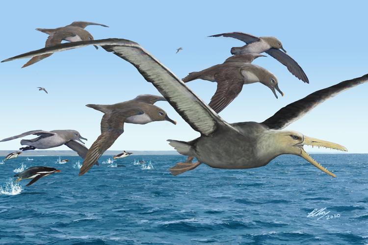 Estos fósiles de 50 millones de años pertenecerían a una gigantesca ave de más de 6 metros