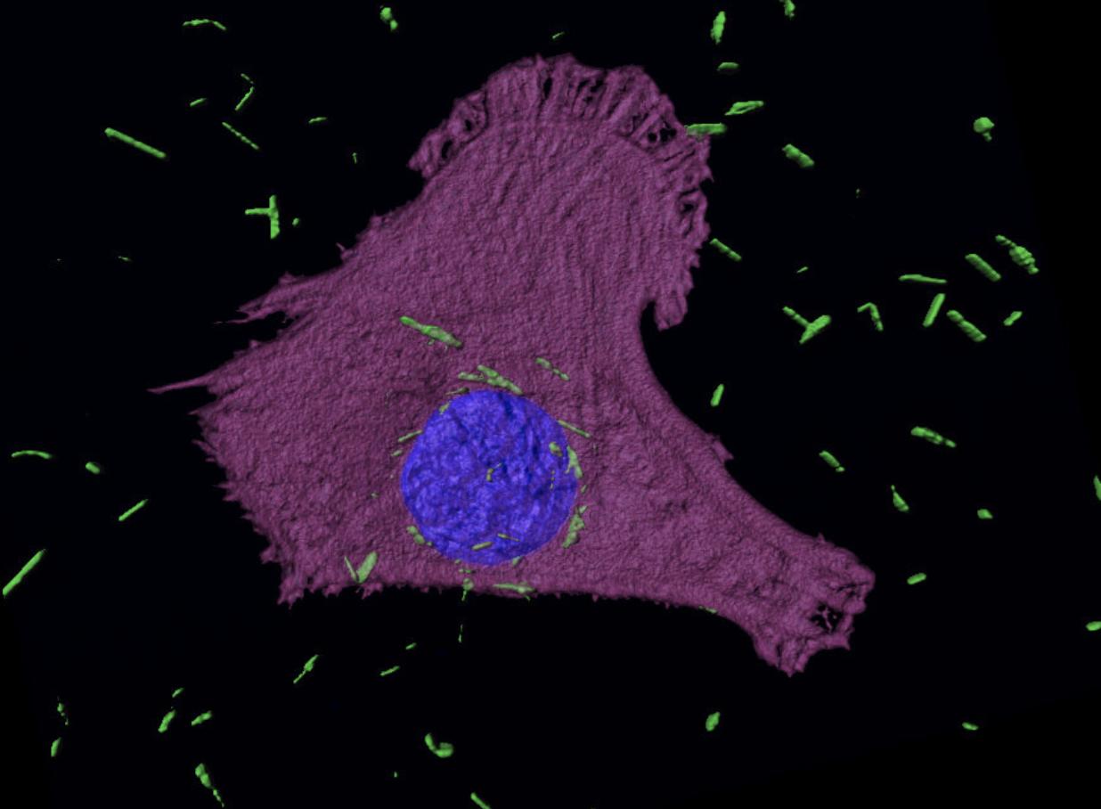 Estos nanotubos de oro destruyen células cancerosas desde el interior