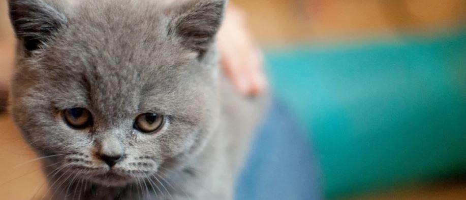 ¿Somos los únicos animales que lloramos con lágrimas?