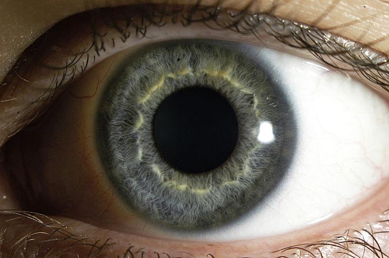 La cornea parece ser resistente a la infección del nuevo coronavirus, encuentra estudio