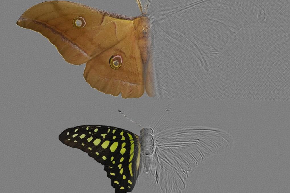 """Millones de años de evolución les dieron a las alas de las polillas una extraña """"metaestructura"""""""