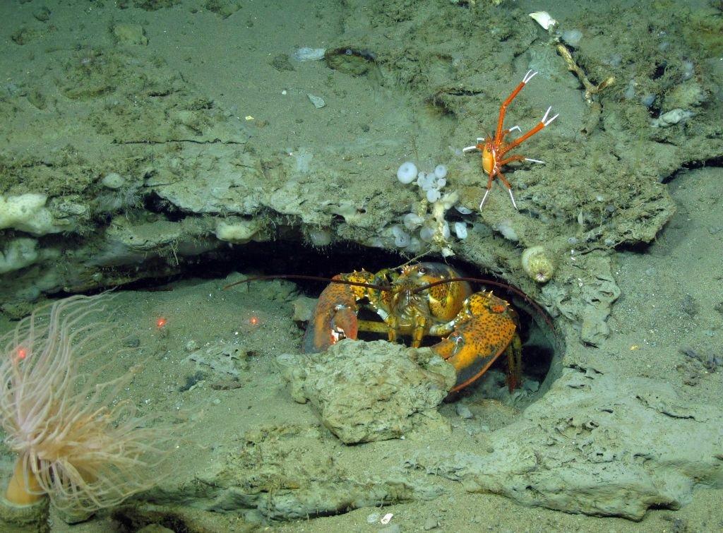 Estos son algunos de los resultados del proyecto ATLAS, la investigación oceánica más grande hasta la fecha