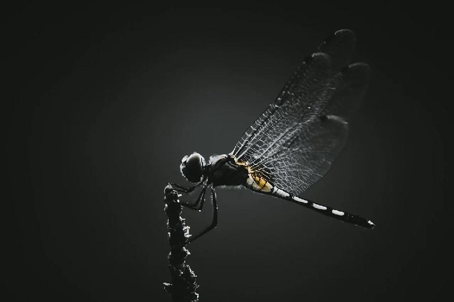 Las alas de los insectos podrían haber evolucionado de las patas de los antiguos crustáceos