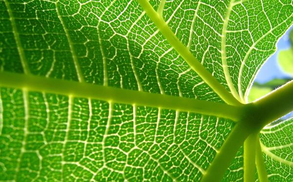 La fotosíntesis explicada (paso a paso)