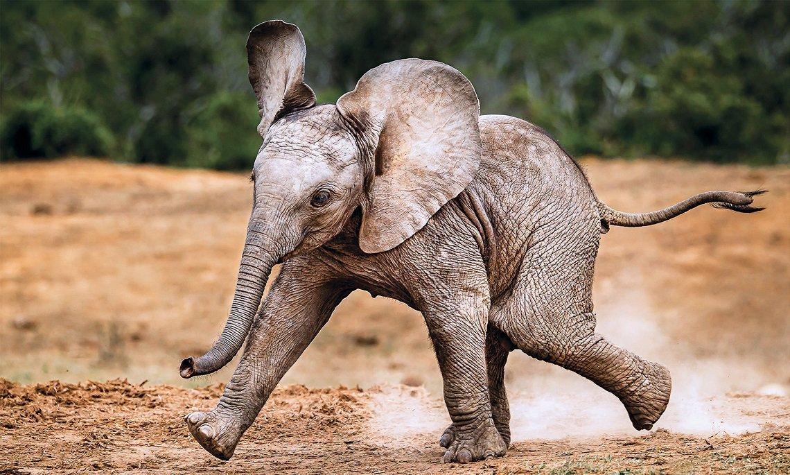 Cosas que debes conocer sobre los elefantes y su comportamiento