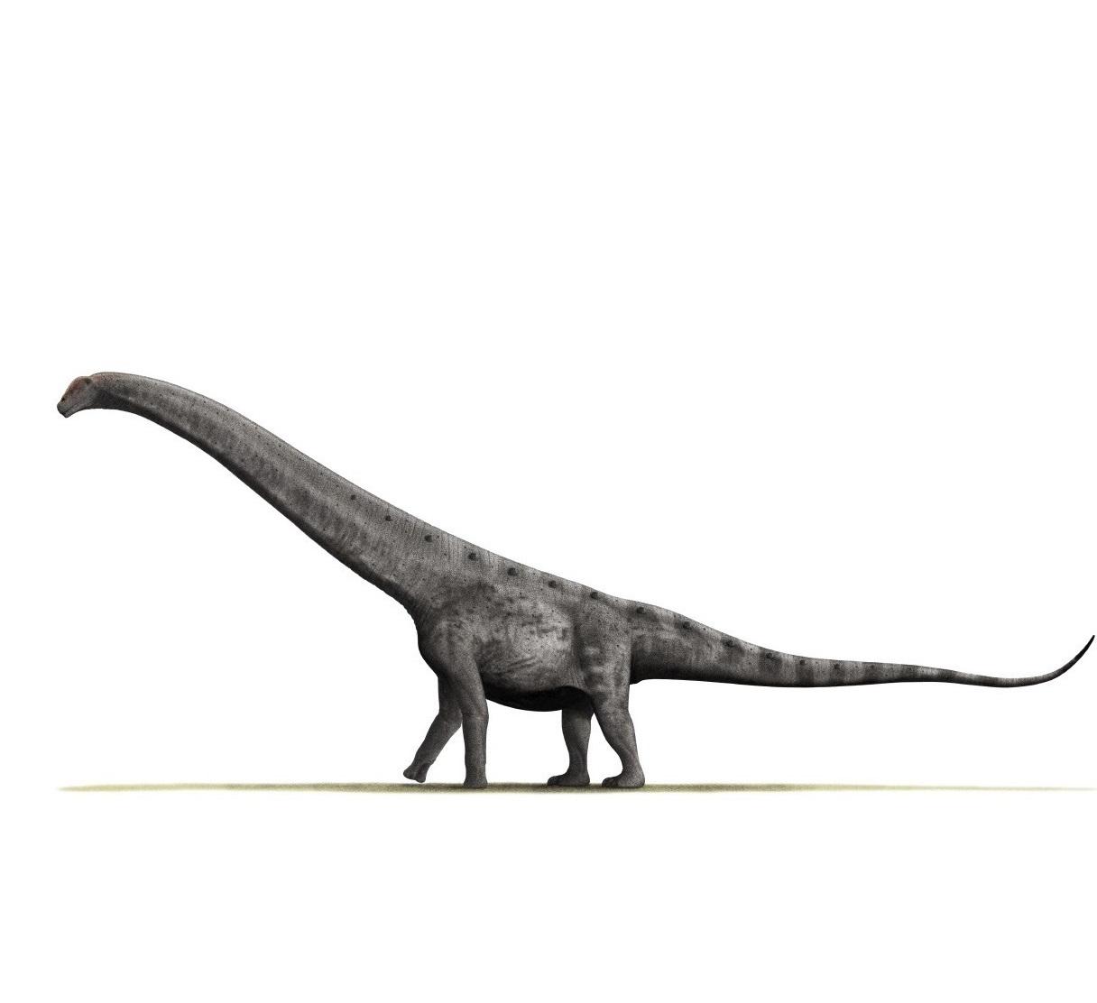 Este dinosaurio encontrado en Argentina podría ser la criatura más grande que jamás haya pisado la Tierra
