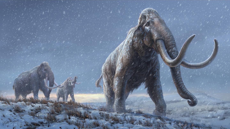 Científicos reconstruyen ADN de mamuts de más de un millón de años por primera vez