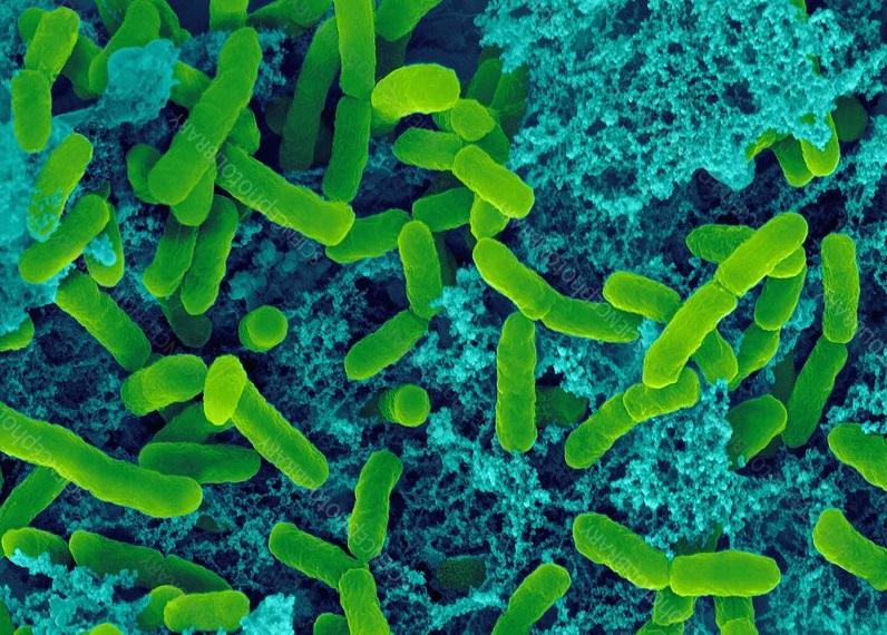 Estas bacterias podrían estar usando efectos cuánticos para sobrevivir