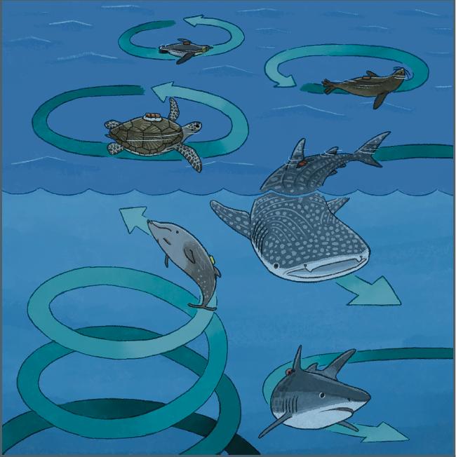 Animales marinos que nadan misteriosamente en círculos, y los científicos no saben el motivo