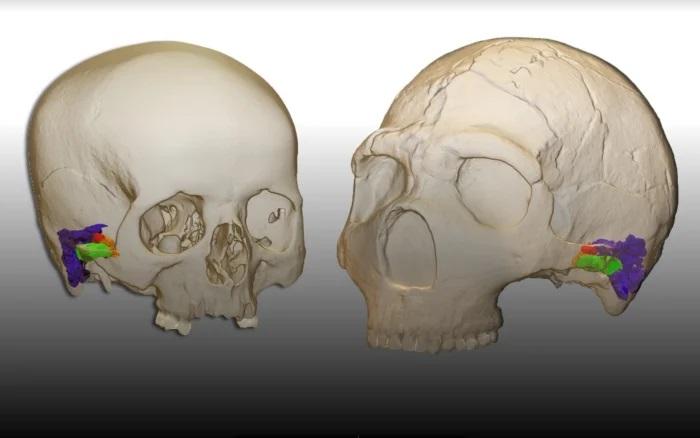 Es probable que los neandertales hayan tenido un habla similar al de nosotros
