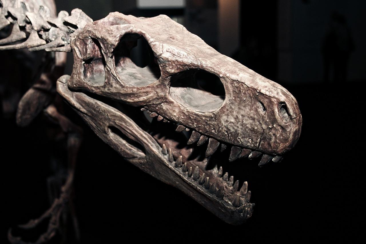 Científicos descubren una ley detrás de la forma de los dientes, espinas, cuernos o garras