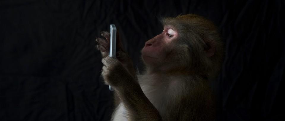 ¿Hay animales que puedan ver señales de Wi-Fi o Bluetooth?