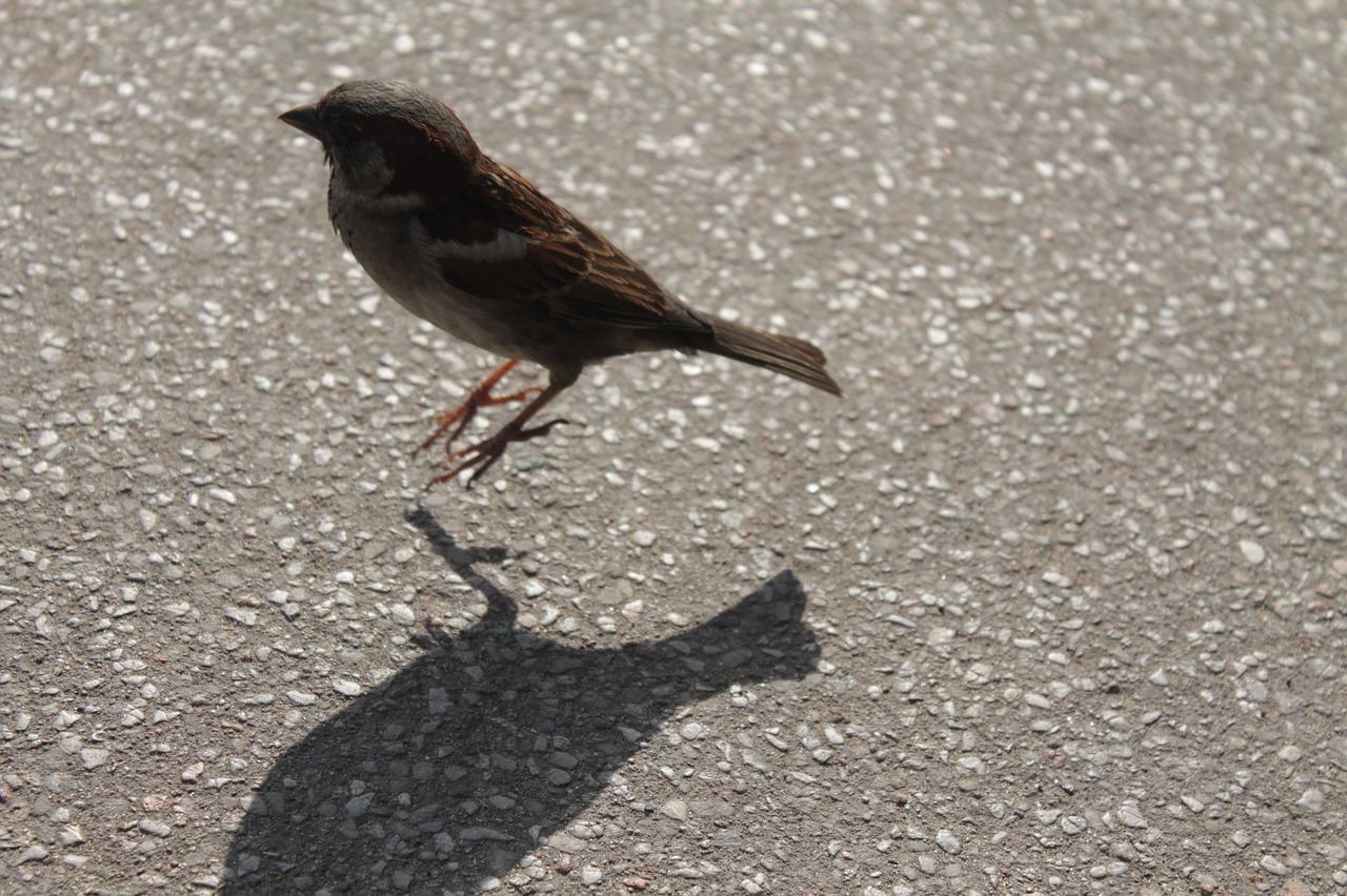 ¿Por qué algunos pájaros saltan y otros caminan?
