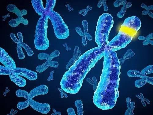 Guía definitiva para no confundir genética, génica y genómica