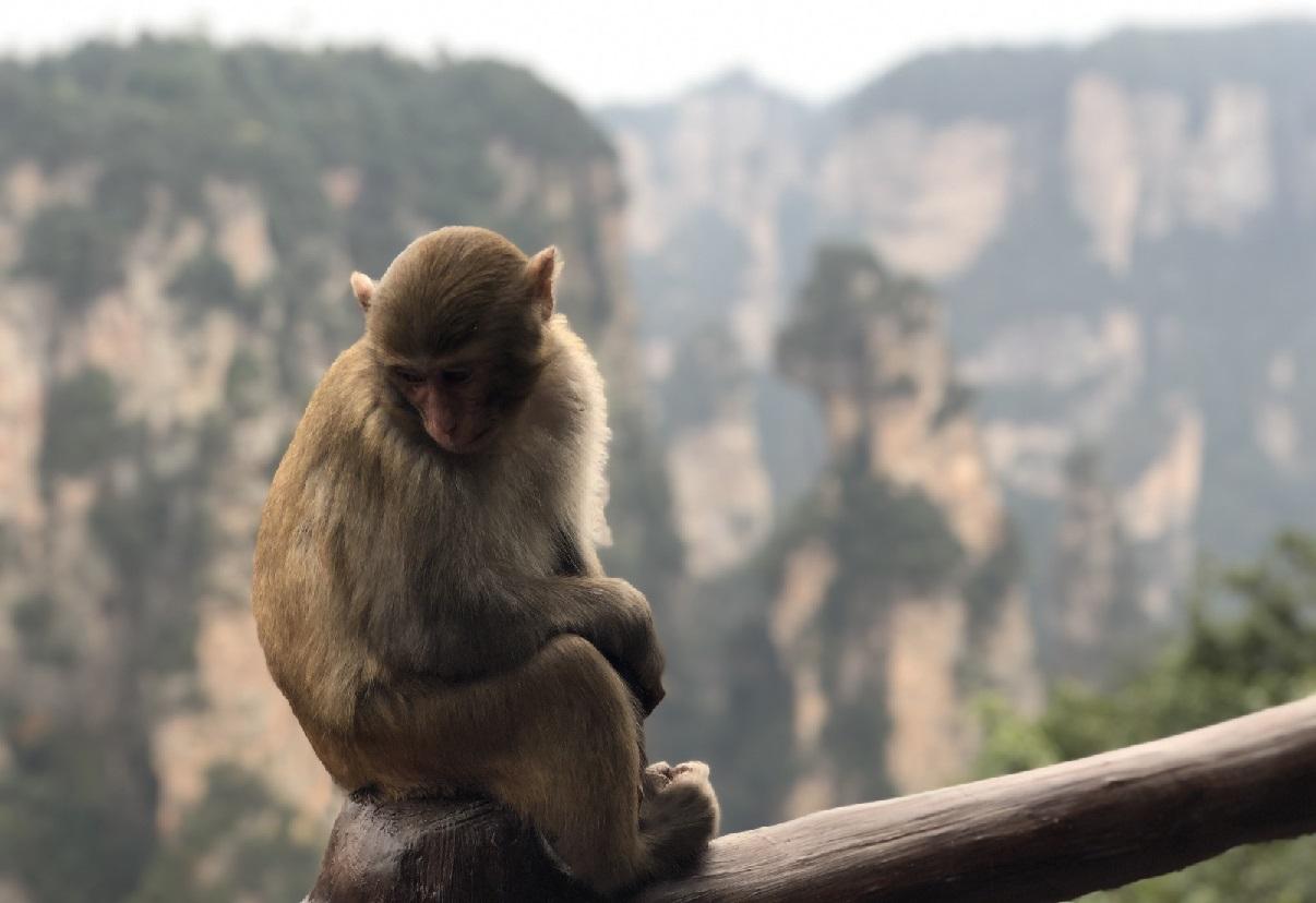 Los monos experimentan conscientemente el mundo visual al igual que nosotros