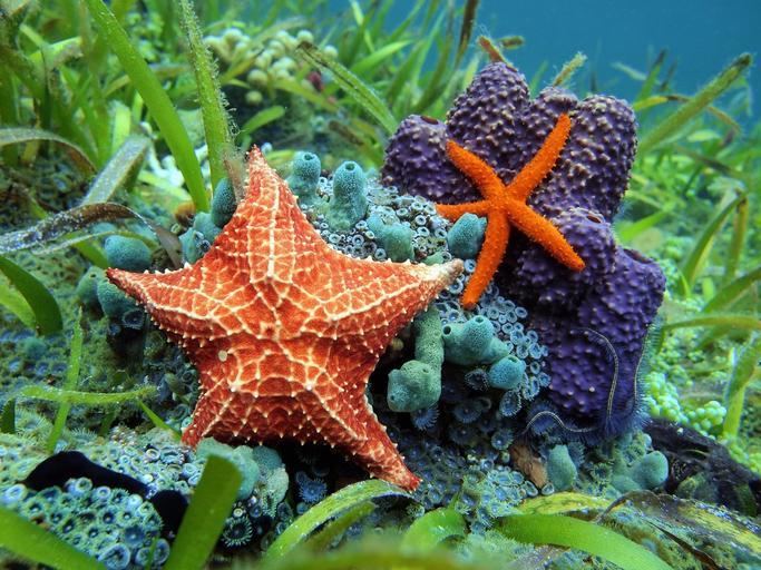 La forma de alimentarse de las estrellas de mar te sorprenderá