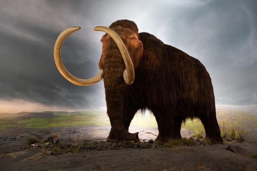 Los seres humanos fuimos en realidad superdepredadores durante 2 millones de años