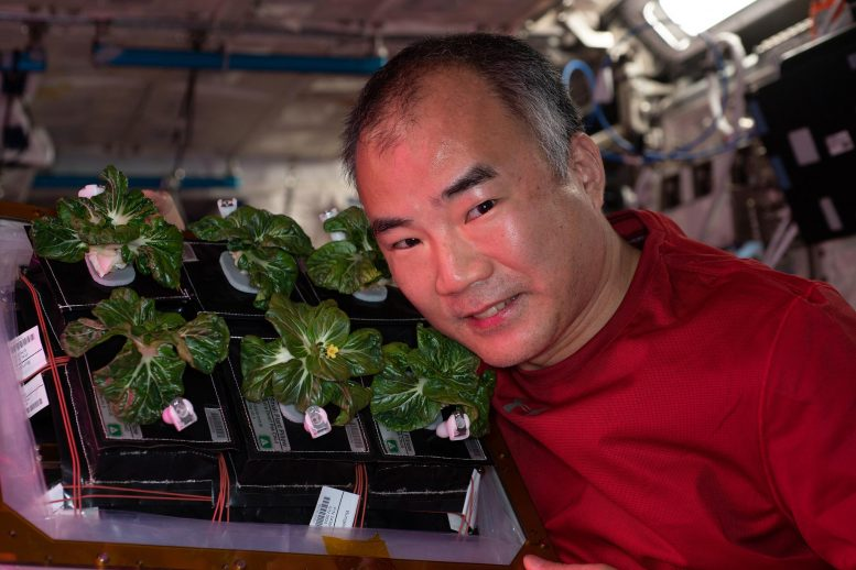 Astronautas se alimentaron con verduras cultivadas en la misma Estación Espacial Internacional