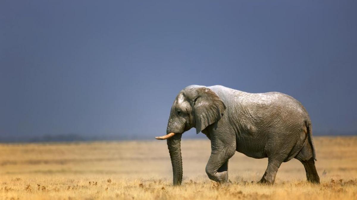 Las cianobacterias como posibles asesinas seriales de elefantes