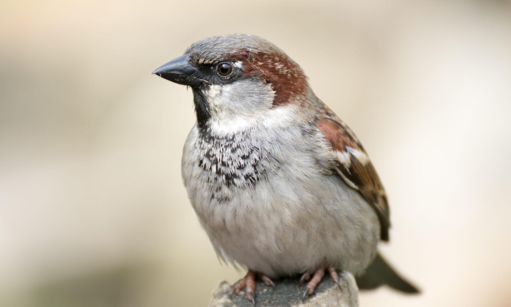 Ecólogos determinan por primera vez el número total de aves en el mundo