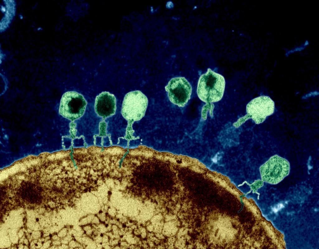 Algunos virus tienen un alfabeto genético alternativo, el genoma Z