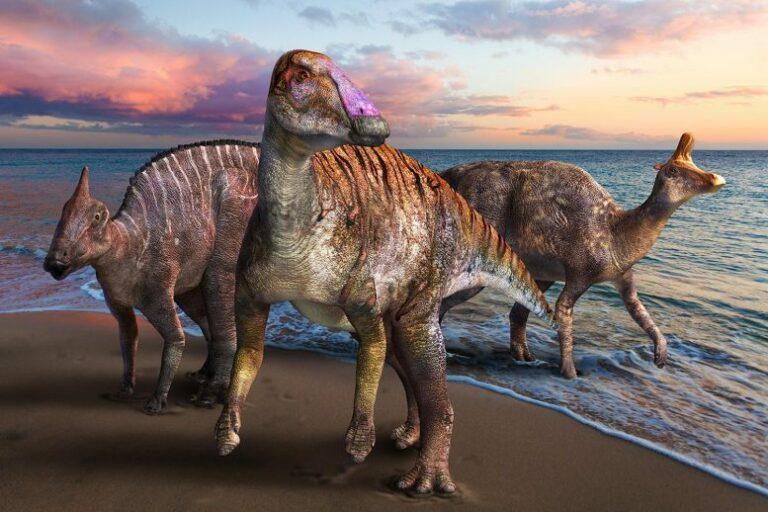 Yamatosaurus: el nuevo dinosaurio «pico de pato» descubierto en Japón
