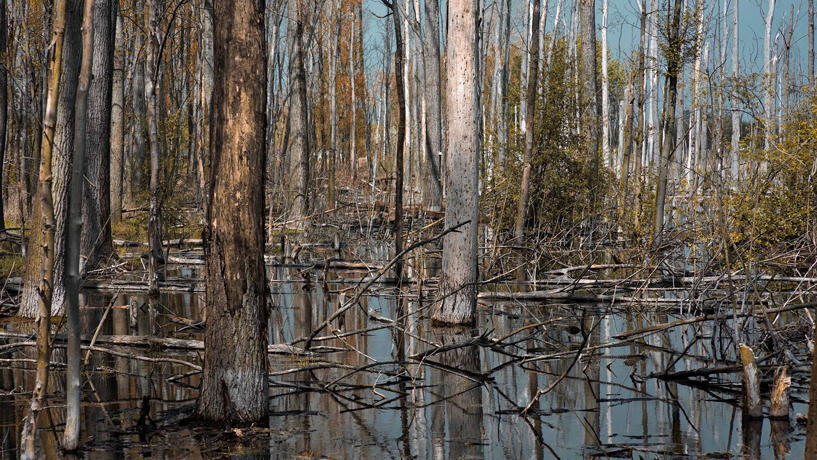Científico acuña término «pedos de árboles» para referirse a emisiones de gases de los bosques fantasmas
