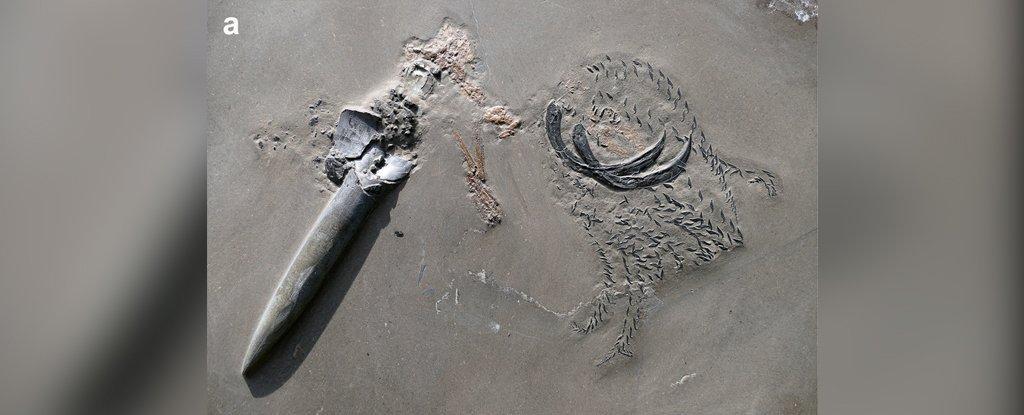 Un depredador se convierte en presa y el momento queda fosilizado desde el Jurásico