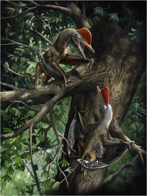 Un pterosaurio apodado «monodáctilo» podría ser el animal más antiguo con pulgar oponible