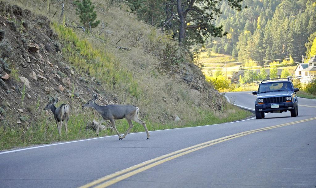 El regreso de los lobos a Wisconsin redujo los accidentes de autos con venados