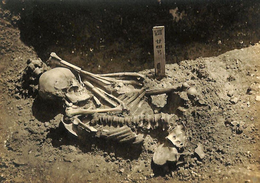 Arqueólogos encuentran a la víctima de tiburón más antigua: su deceso ocurrió hace 3 mil años
