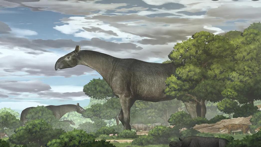 Un cráneo encontrado en China revela a uno de los mamíferos más grandes que alguna vez poblaron la Tierra
