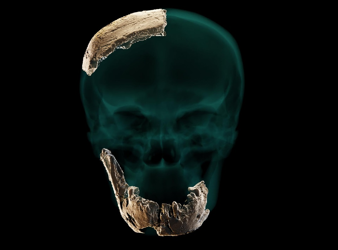 Paleontólogos descubren un antiguo tipo de humano previamente desconocido