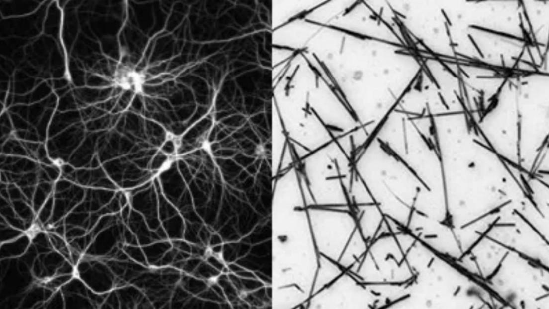 """Científicos desarrollan una red artificial mantenida al """"borde del caos"""" que actúa como un cerebro humano"""