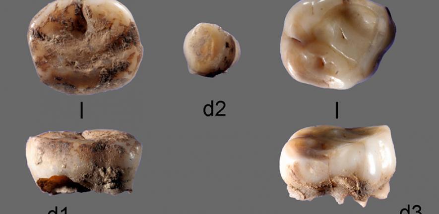 ADN encontrado en dientes sugiere que los adenovirus son más antiguos que el Homo sapiens