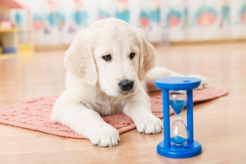 ¿Los perros tienen un concepto del tiempo?