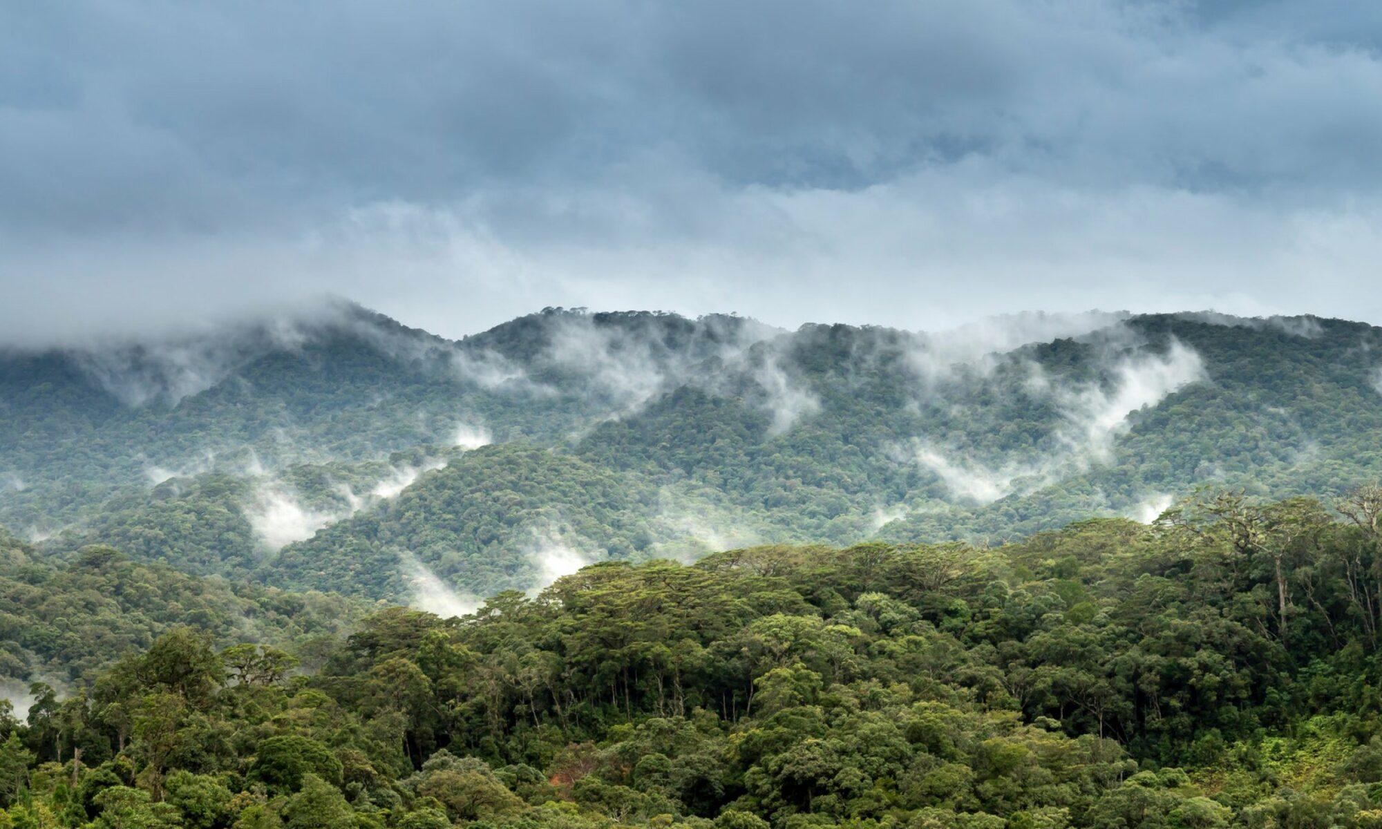 Sembrar bosques podría enfriar la atmósfera de la Tierra más de lo que se pensaba