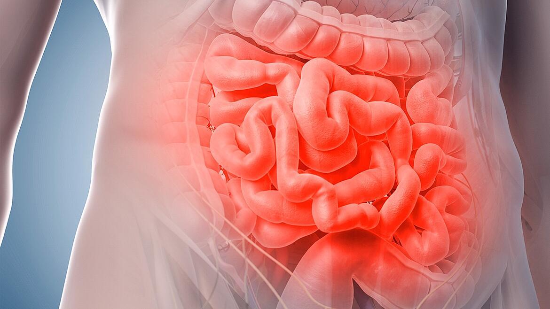 Tienes un segundo cerebro en tus intestinos y evolucionó antes que el cerebro de tu cabeza