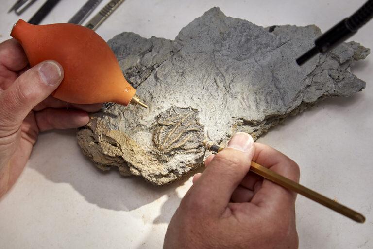 Descubren una «Pompeya Jurásica» de animales marinos del Jurásico Medio sepultados en barro