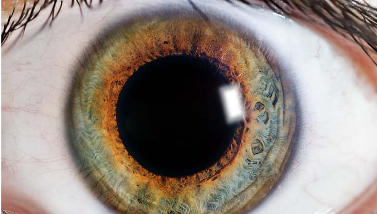 Por primera vez se demuestra que es posible cambiar el tamaño de las pupilas a voluntad propia